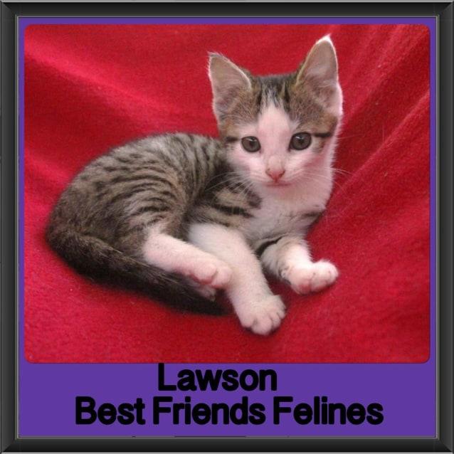 Photo of Lawson