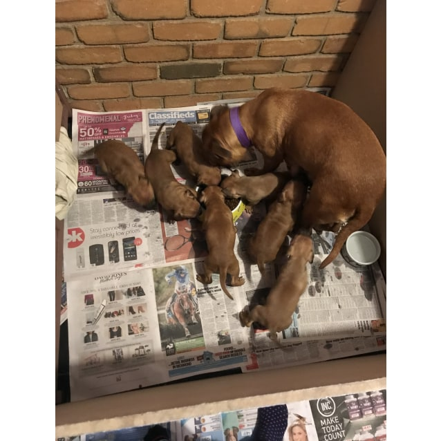 Photo of Puppies  (On Trial)