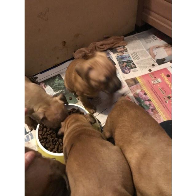 Photo of Puppies