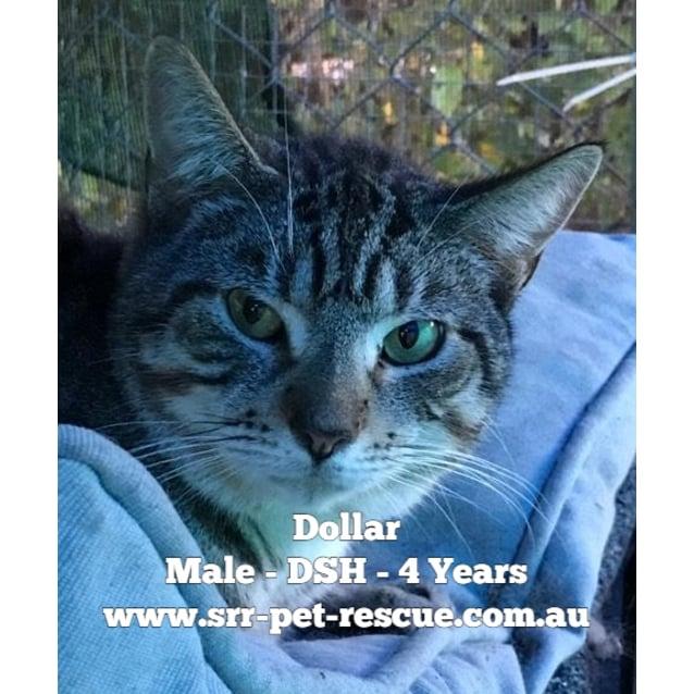 Photo of Dollar