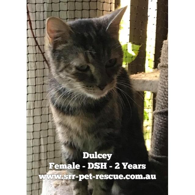 Photo of Dulcey