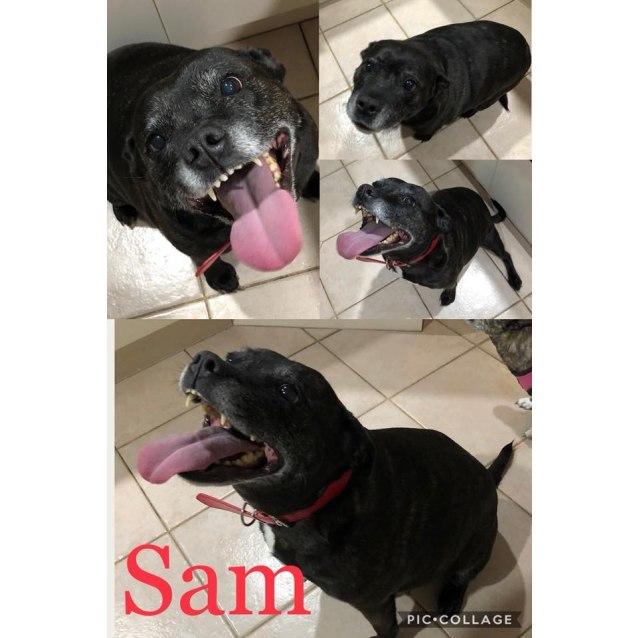 Photo of Sammy With Carol