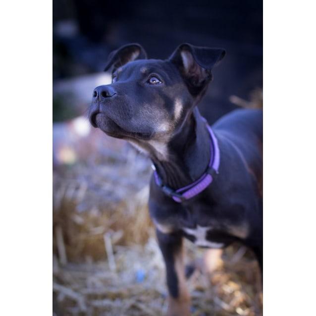 Photo of Gwen