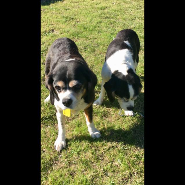 Photo of Cracker (Dl1936) And Jack (Dl1937)