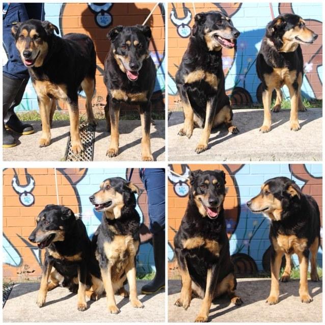 Photo of Zeus & Shilo (3650 & 3651)