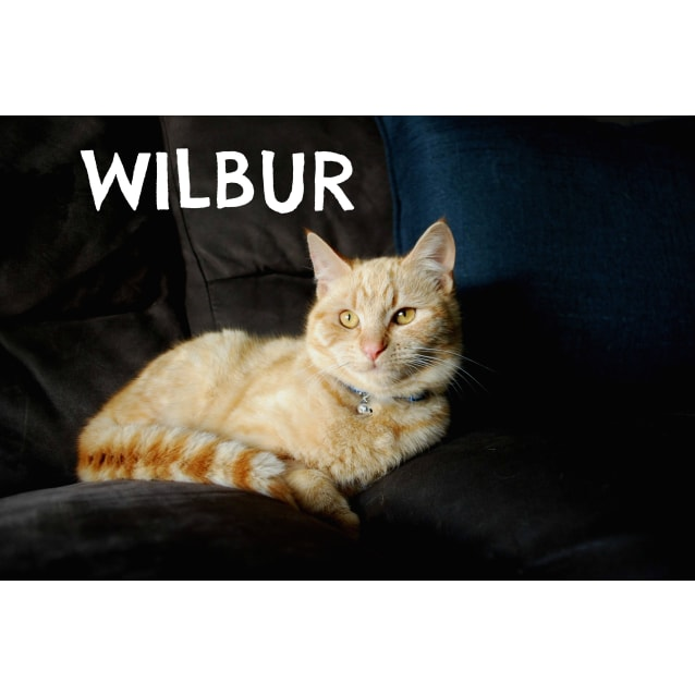 Photo of Wilbur & Clyde (Bonded Pair) ❤️