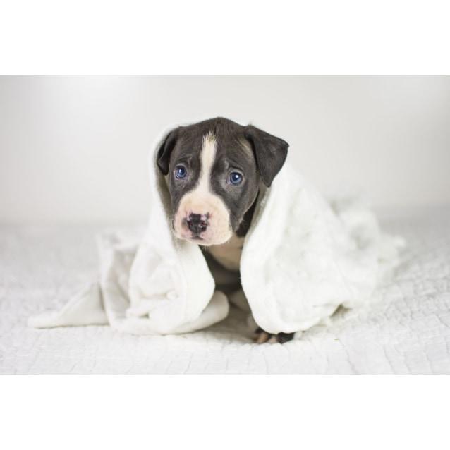Photo of Biggs Jasper