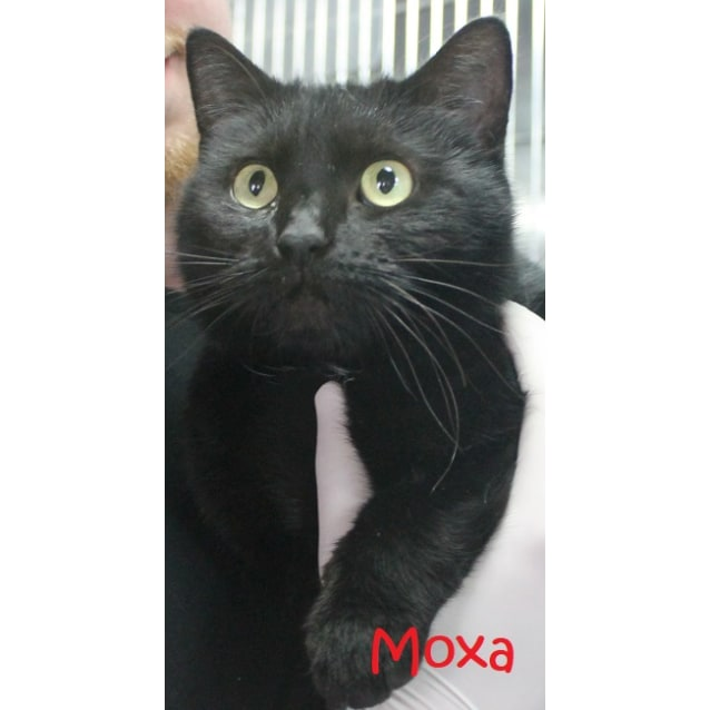 Photo of Moxa