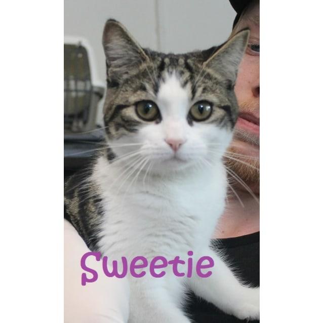Photo of Sweetie