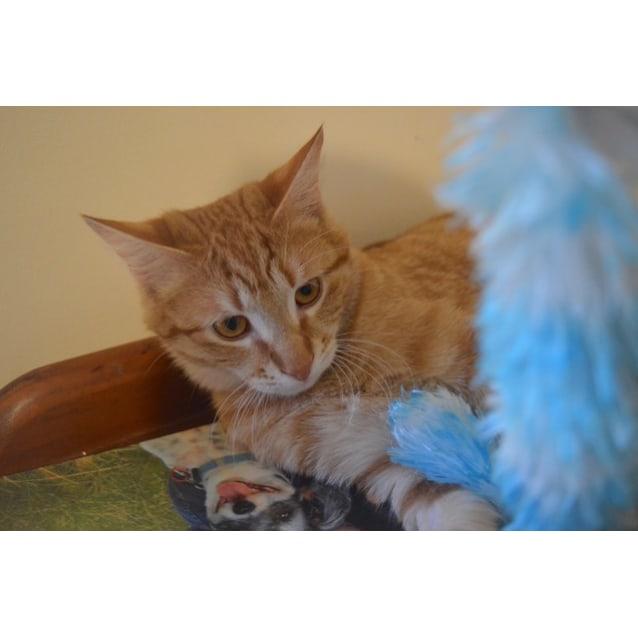 Photo of Elfo C3320    Adoption Pending