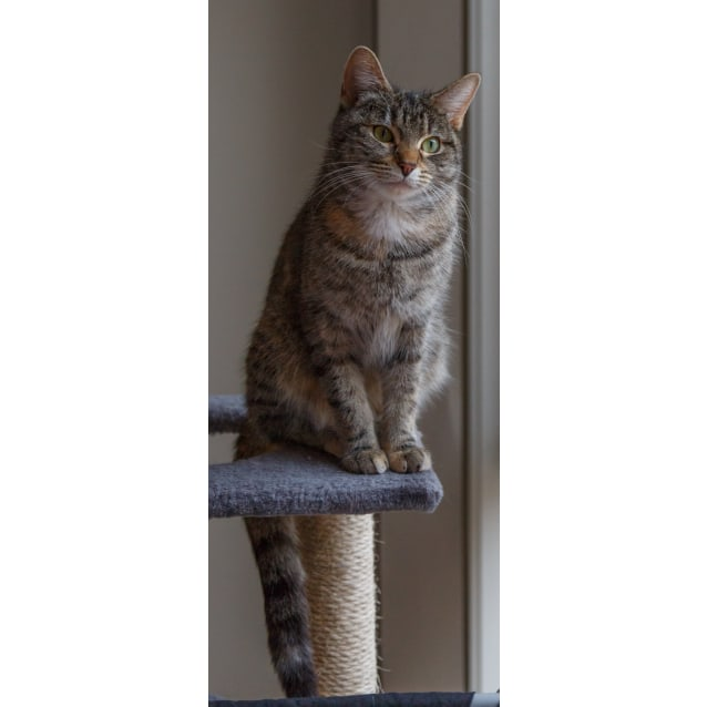 Photo of Pippi (Located In Carnegie)