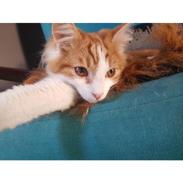 Photo of Mango (Located In Endeavour Hills)