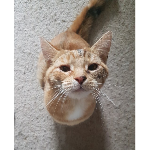 Photo of Peach (Located In Endeavour Hills)