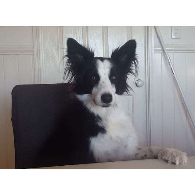Photo of Max *Private Rehome*