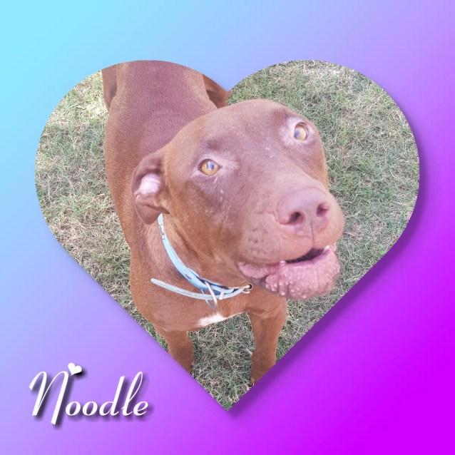 Photo of Noodle