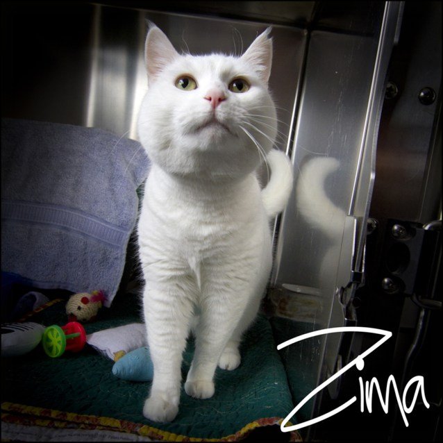 Photo of Zima