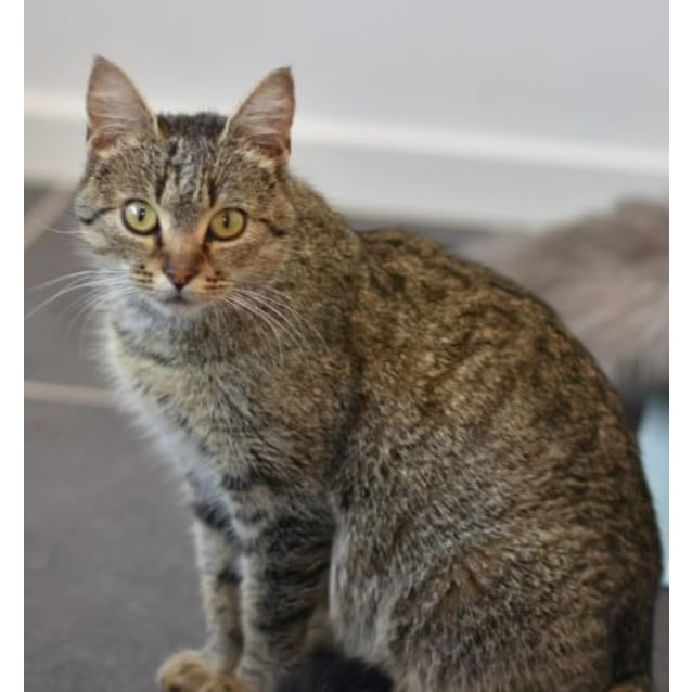 Photo of Eliza ***2nd Chance Cat Rescue***