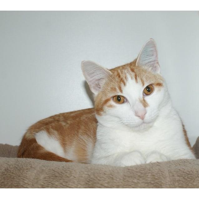Photo of Garfield Sua002939