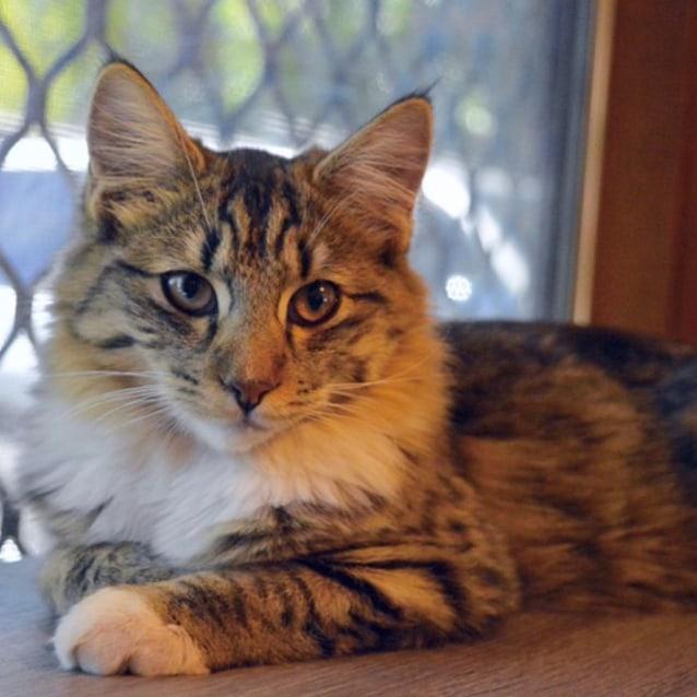 Photo of Maxine C3324   Adoption Pending