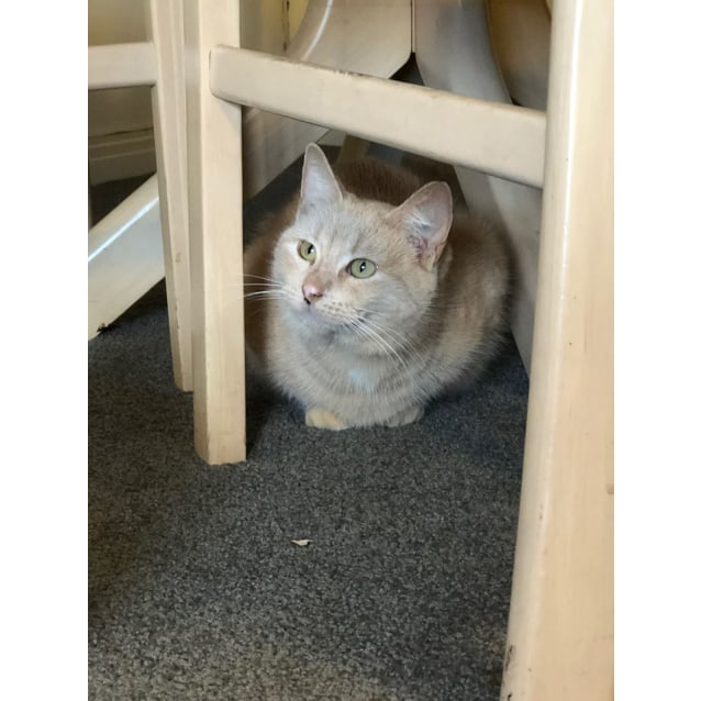 Photo of Amber (Located In Brighton East)
