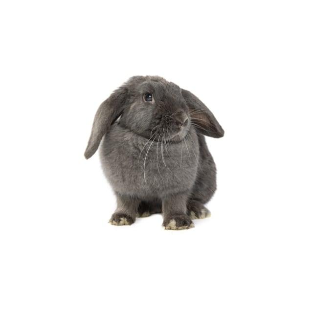 Photo of Bopsy