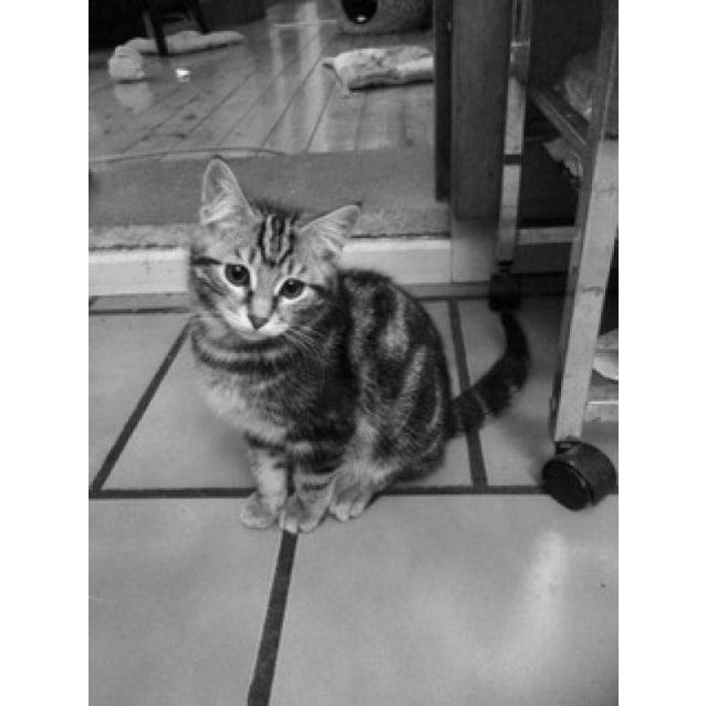 Photo of Mr Jynx