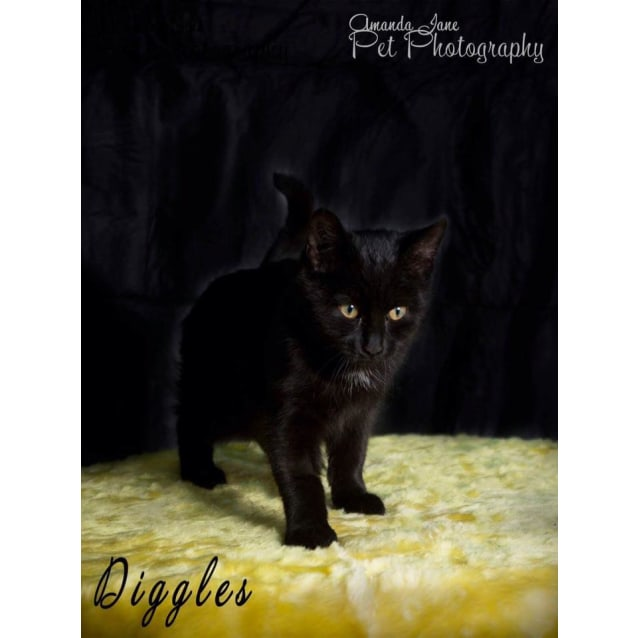 Photo of Diggles