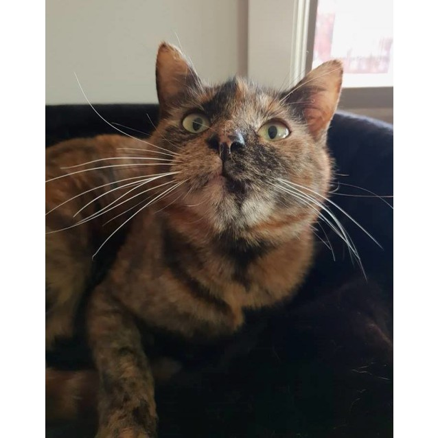 Photo of Diva **2nd Chance Cat Rescue**