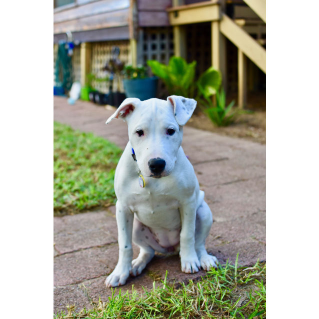 Photo of Zara | Pup