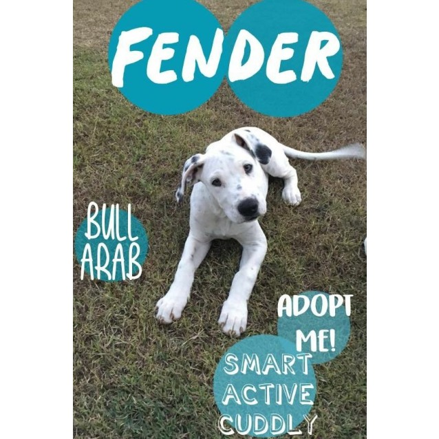 Photo of Fender