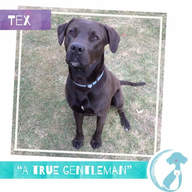 Photo of Tex