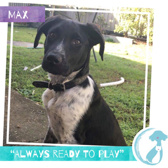 Photo of Max