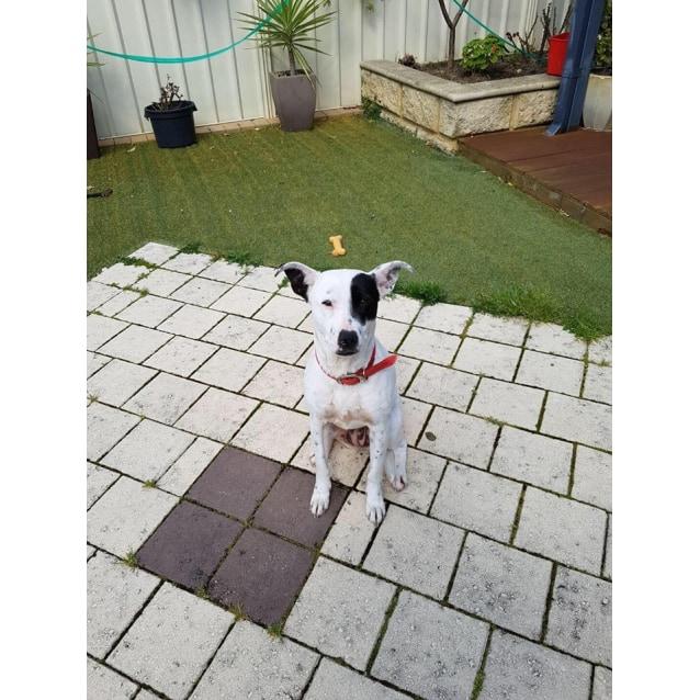 Photo of Rosie (Av942)