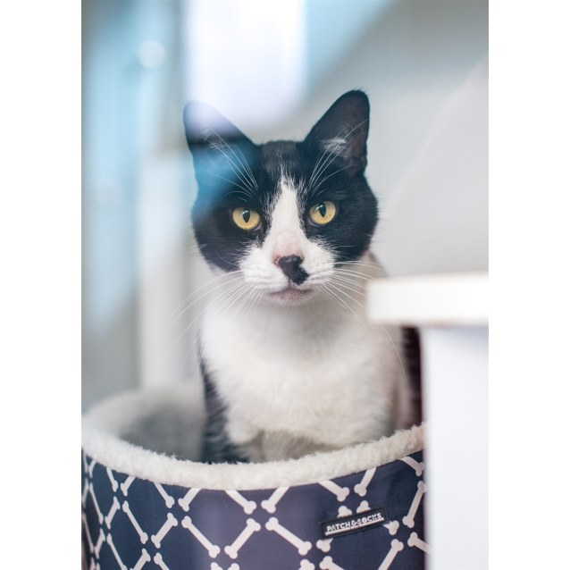 Photo of Puss