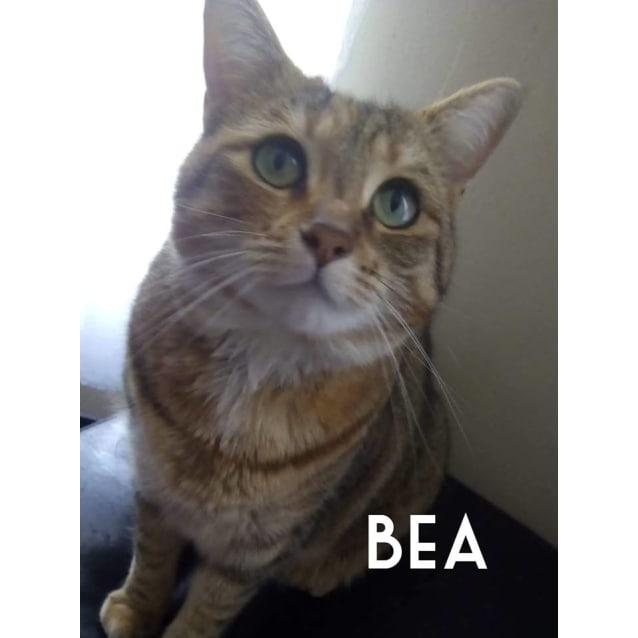 Photo of Bea