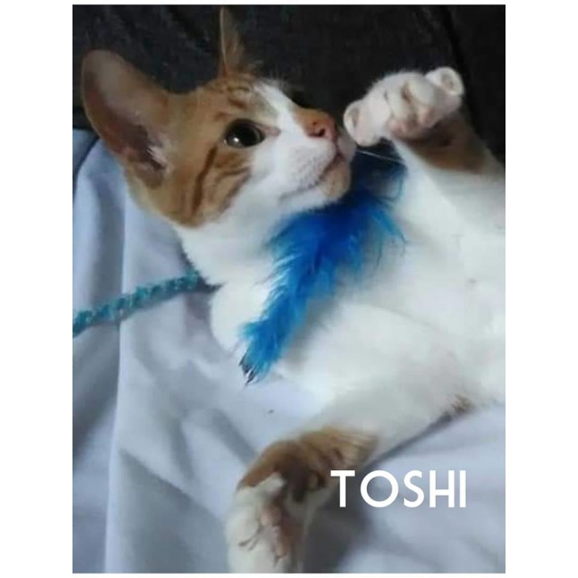 Photo of Toshi