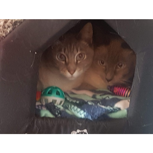 Photo of Ashika & Satra   Located At Princes Hill (Carlton)