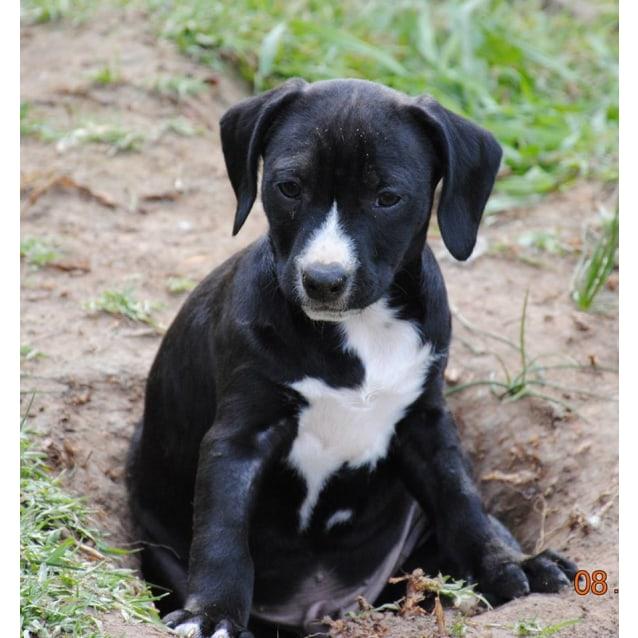 Photo of Lab X Pups