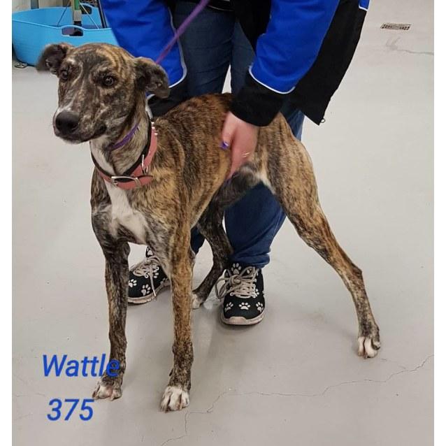 Photo of Wattle