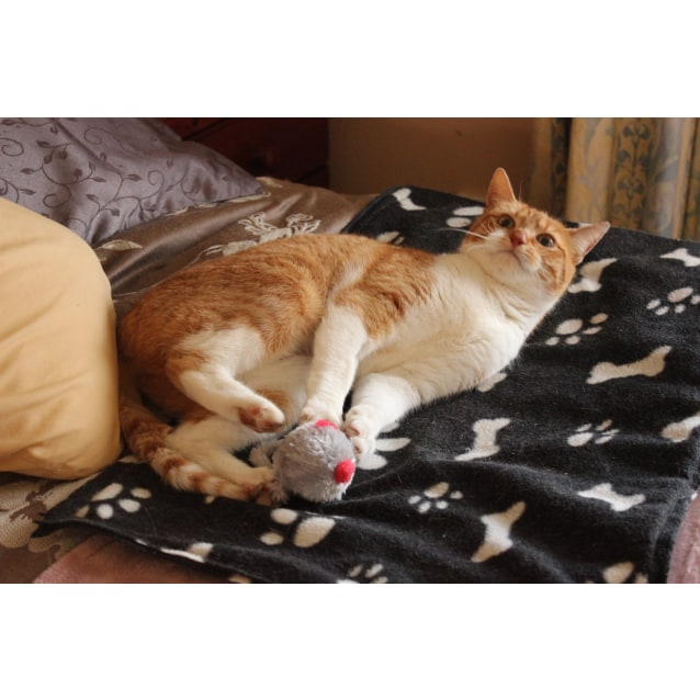 Photo of Russo **2nd Chance Cat Rescue**