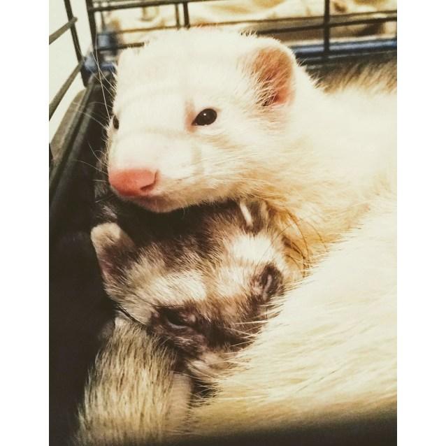 Photo of Lu & Will
