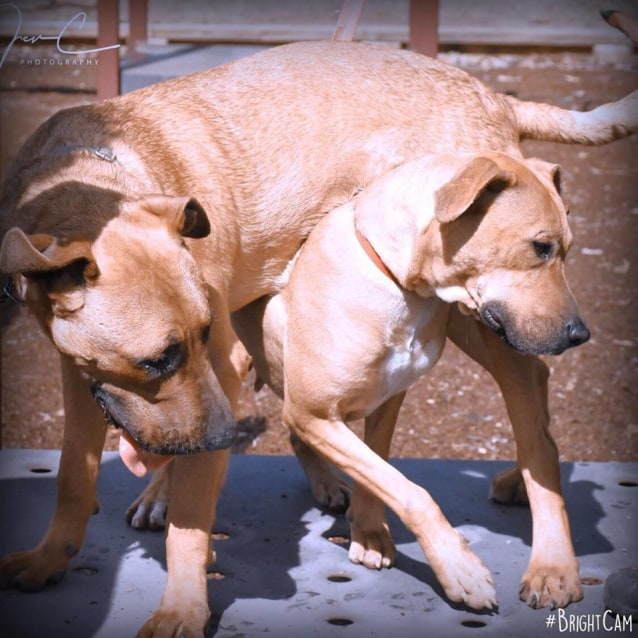 Photo of 💙 Fred & Wilma 💙 ~ Bonded Mother & Son