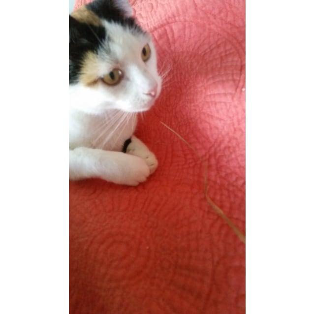 Photo of Leona