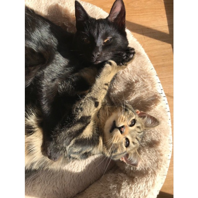 Photo of Black Shadow & Scraps (Located In Sale)