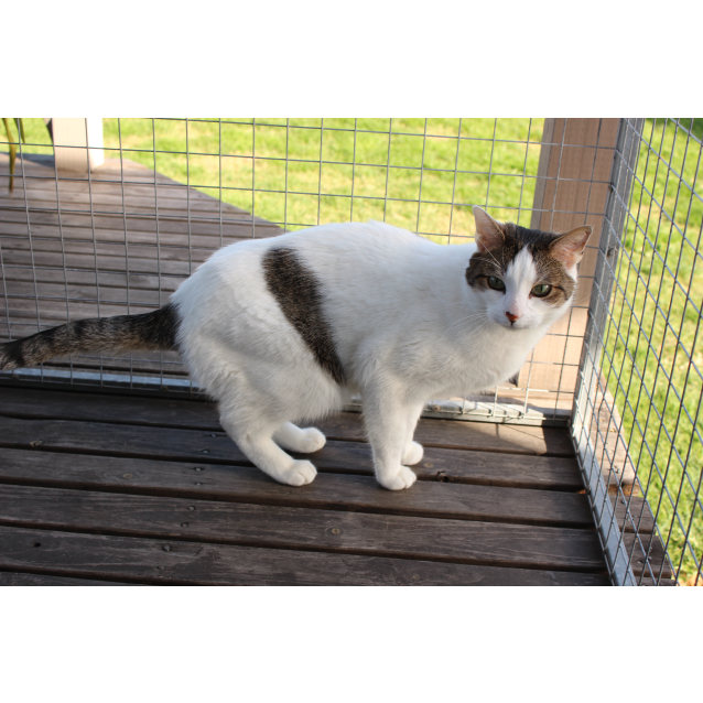 Photo of Edward **2nd Chance Cat Rescue**