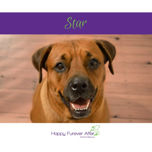 Photo of Star