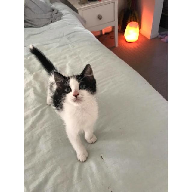 Photo of Daffy