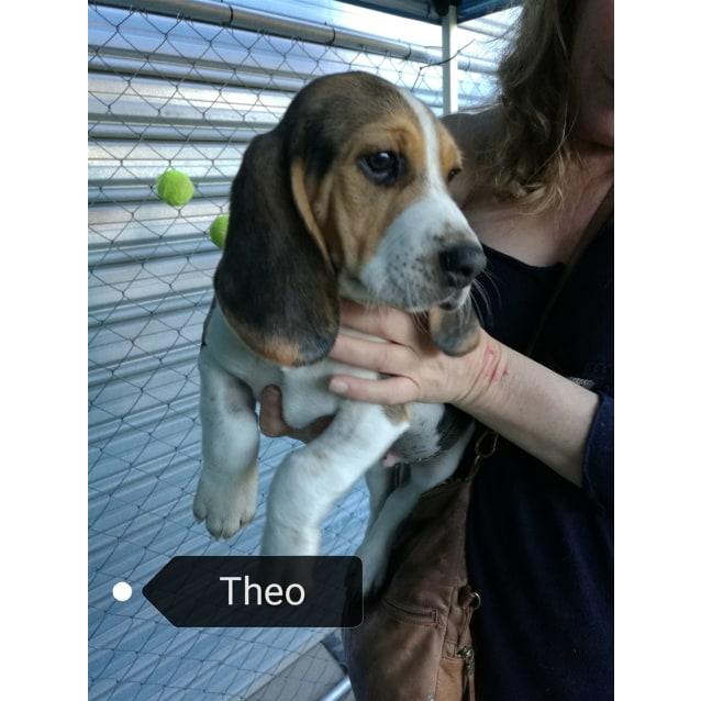 Photo of Theo