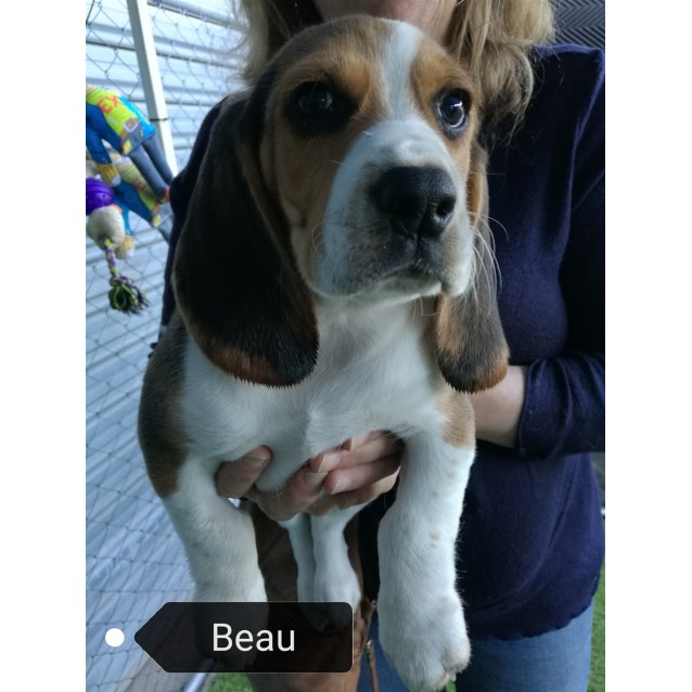 Photo of Beau