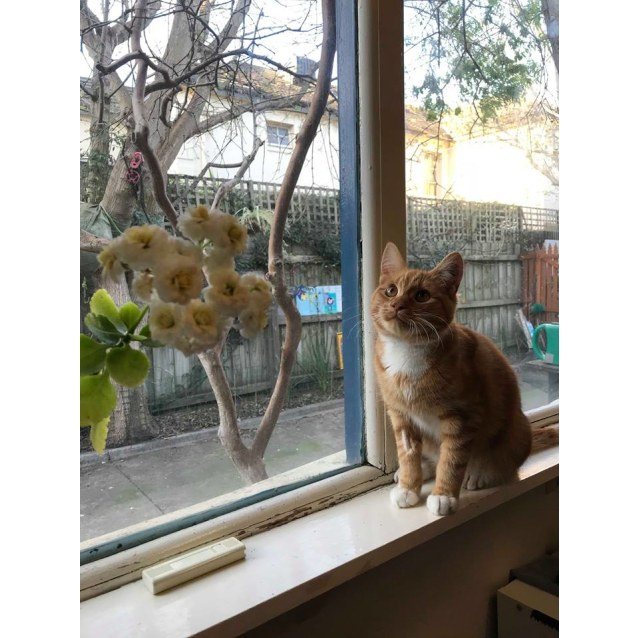 Photo of Ron (Located In Caulfield North)